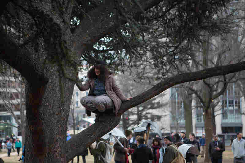 A protestor climbs a tree in Franklin Square to get a better view of a protest action happening nearby.