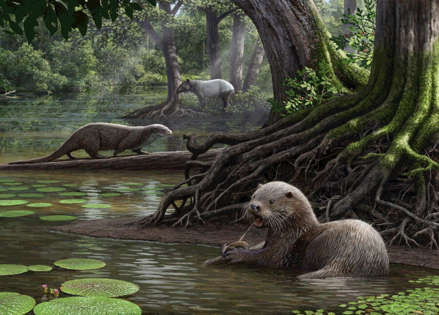 Scientists Discover Prehistoric Giant Otter Species In China : The ...