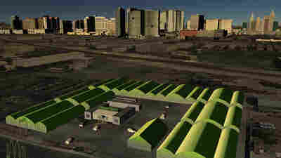 Farm Of The Future: What Grows In Las Vegas Stays In Las Vegas