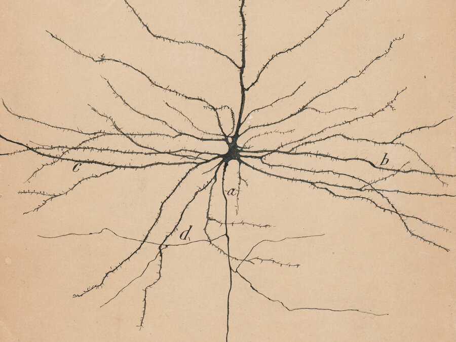 Santiago Ramón y Cajal's Artistic Skill Revealed The Hidden Brain ...