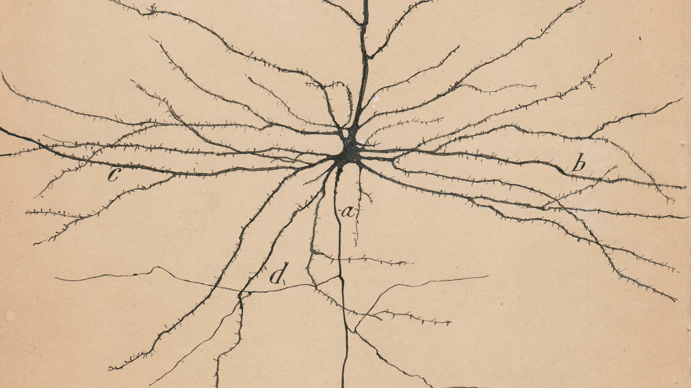 Art exhibition celebrates drawings by the founder of modern neuroscience