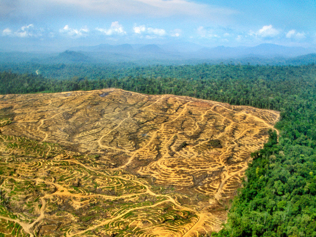 """Opening Pandora's box: Once pristine rain forest in Borneo, the land on the left has been clear-cut for a palm oil plantation. Everytime people cut into forests, they create """"edges,"""" where people come into contact with animals — and their viruses."""
