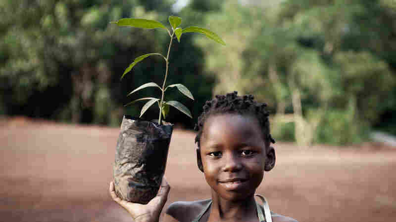 Study: African Farmers Have A Surprise Economic Weapon — Trees