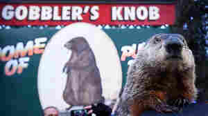 Groundhog Day 2017: Winter Is (Still) Coming, Punxsutawney Phil Says