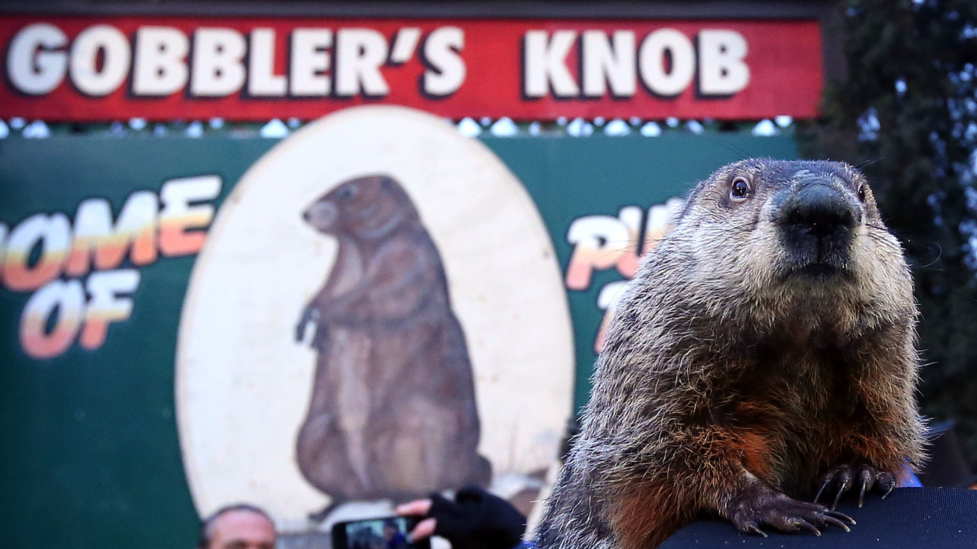 Uncategorized Groundhog Day Stories groundhog day npr 2017 winter is still coming punxsutawney phil says