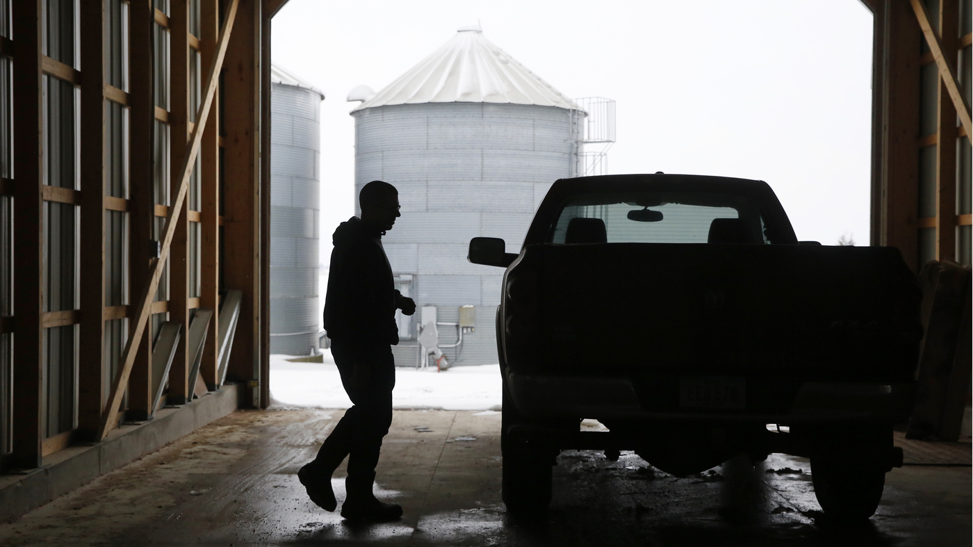 Pig Farming In Iowa Means Dirt Under Your Fingernails And A Strong Sense Of  Pride : NPR