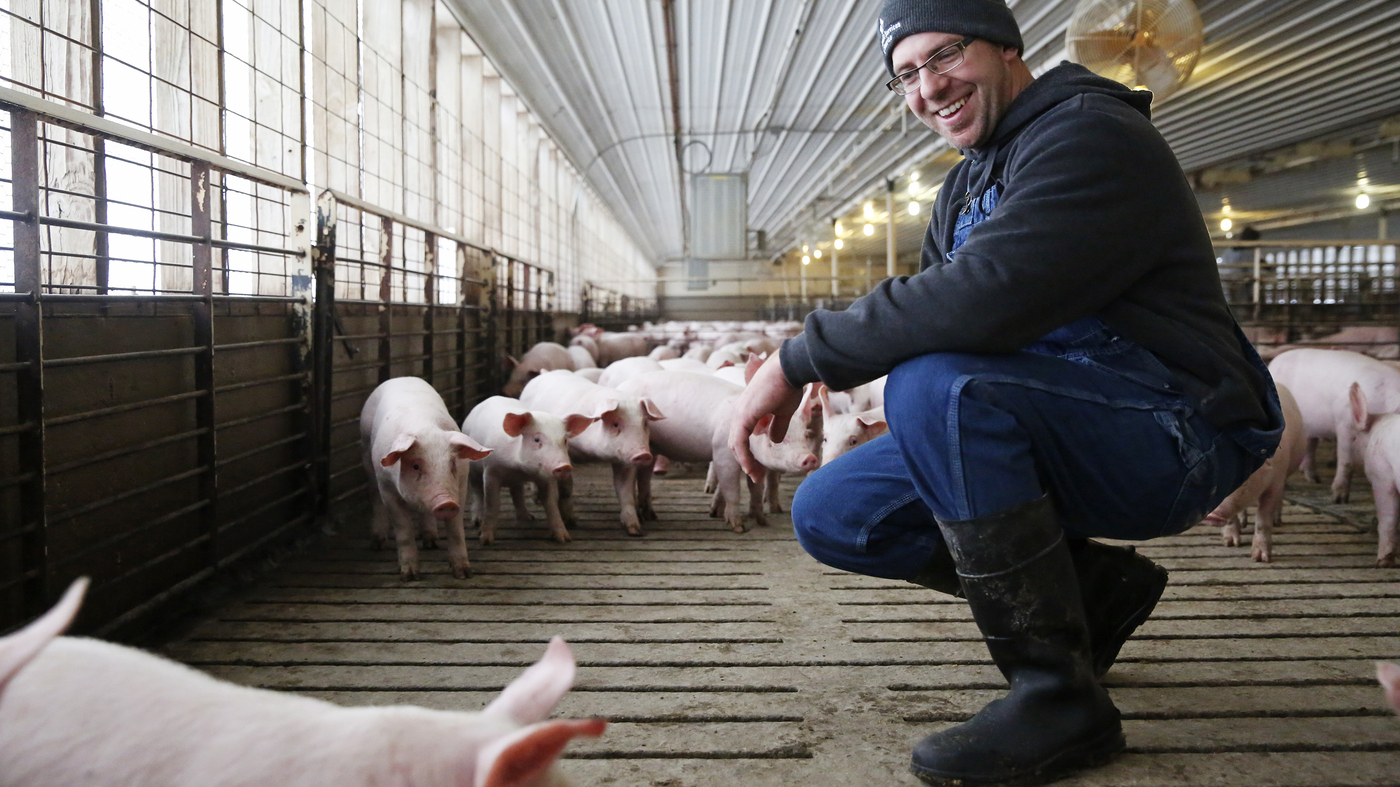 Pig Farming In Iowa Means Dirt Under Your Fingernails And A