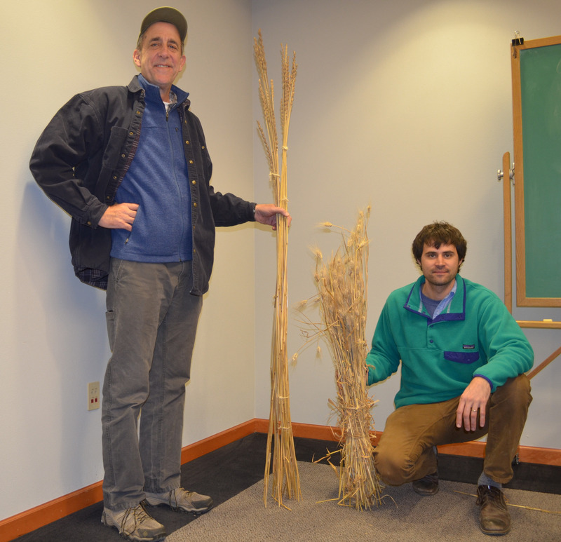 Don't Call It Wheat: An Environmentally Friendly Grain Takes Root