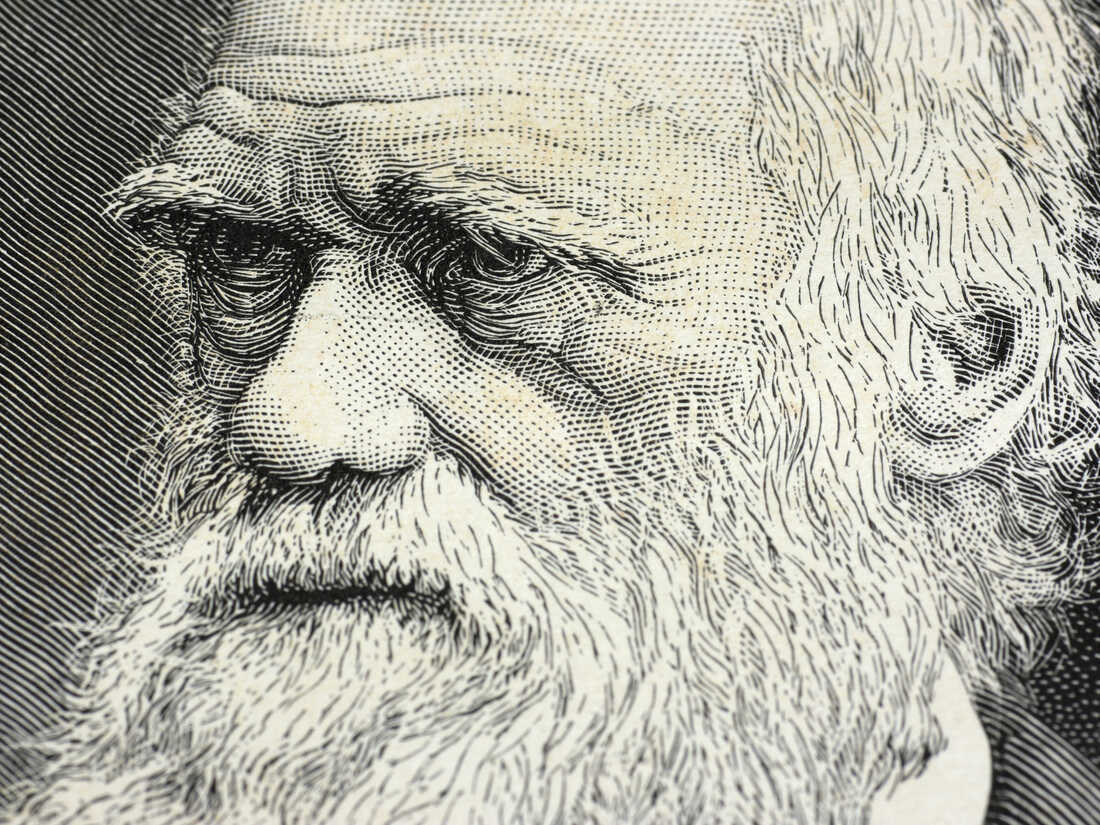 Charles Darwin was a careful reader and a diligent record-keeper when it came to his own habits, says Tania Lombrozo.