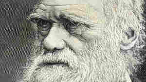 3 Things You Might Not Know About Charles Darwin