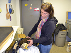 Susan Gallagher, chief naturalist at the Carbon County Environmental Education Center, examines the eagle who died from lead poisoning.