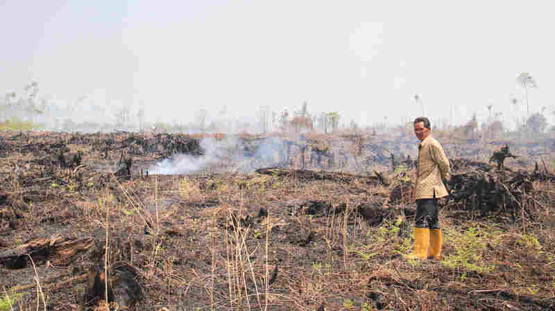 Indonesia's Peat Fires Still Blaze, But Not As Much As They Used To