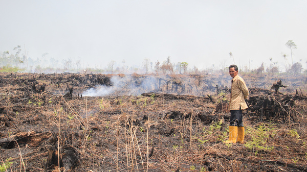Farmer Arif Subandi surveys scorched peat lands near his house in the village of Punggur Kecil in West Kalimantan Province on Borneo.