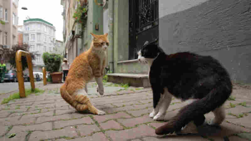Ode To The Street Cat: 'Kedi' Follows Istanbul's Famous Felines