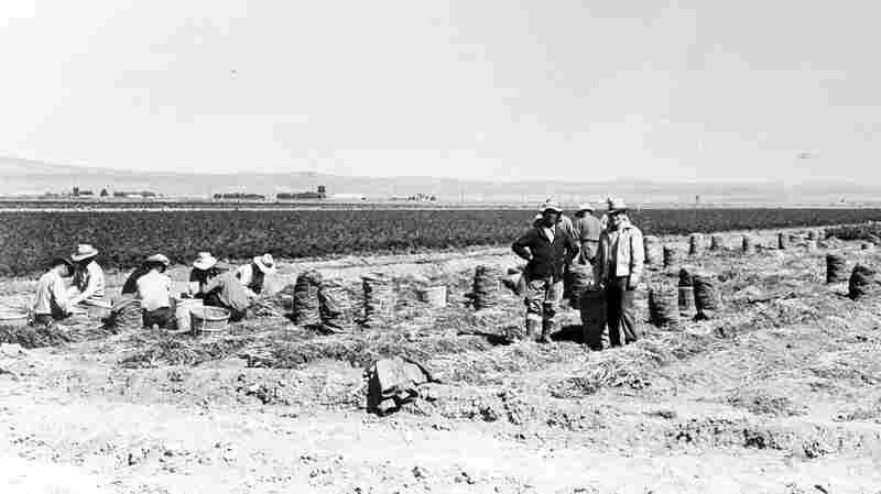 Farming Behind Barbed Wire: Japanese-Americans Remember WWII Incarceration