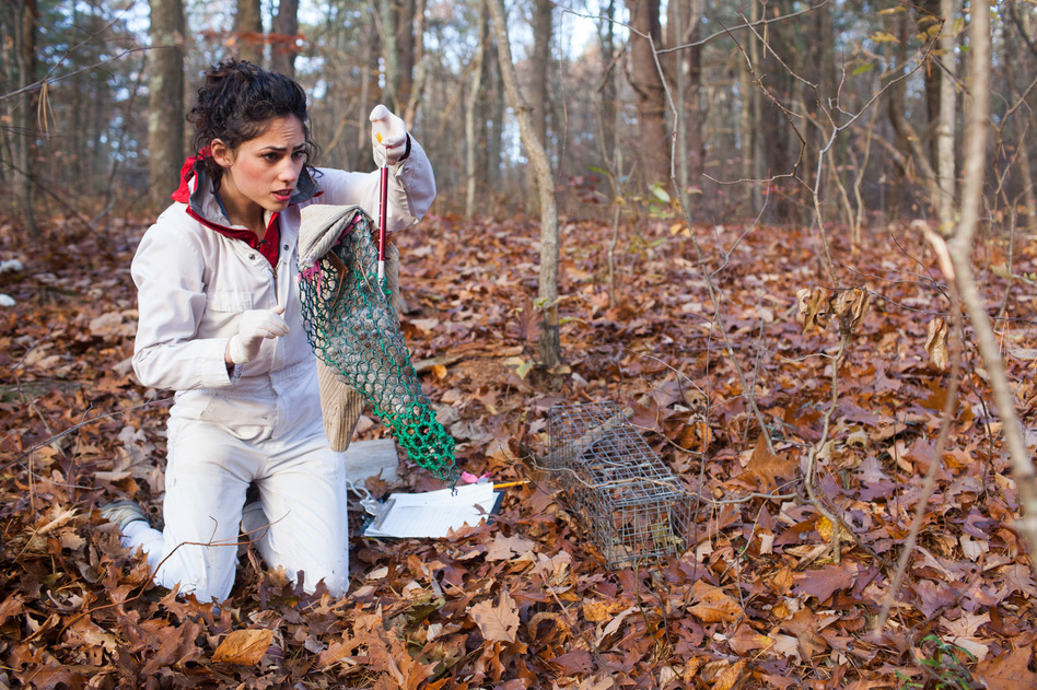 To figure out why Lyme has become more prevalent, researchers at the Cary Institute of Ecosystem Studies in Millbrook, N.Y., have trapped hundreds of thousands of rodents in the woods over the past 20 years. Research assistant Francesca Rubino checks a squirrel for ticks.