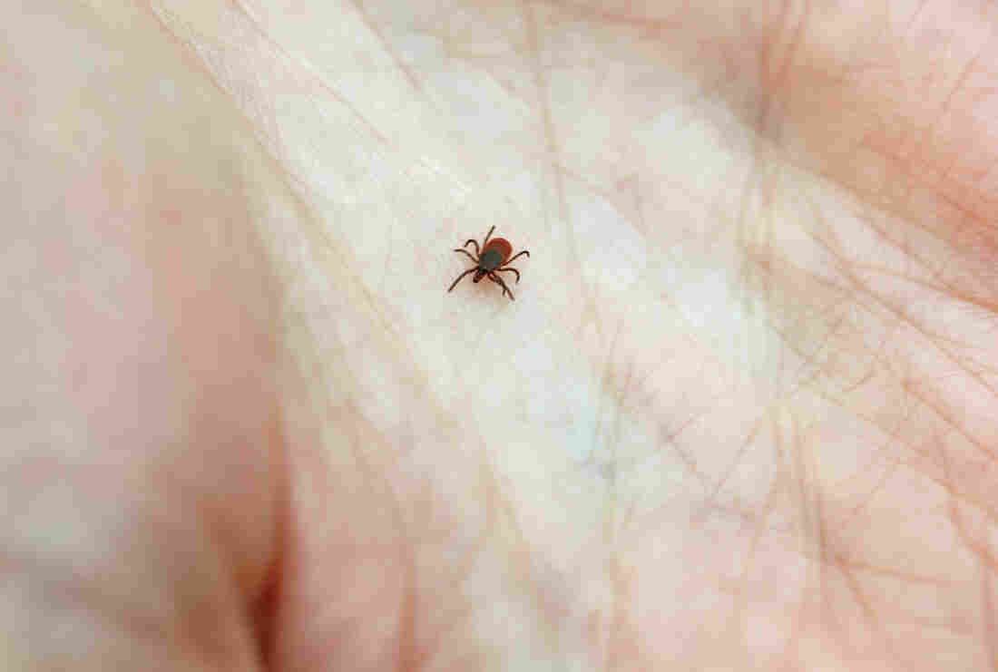 Tick-borne Lyme disease could see increase in area
