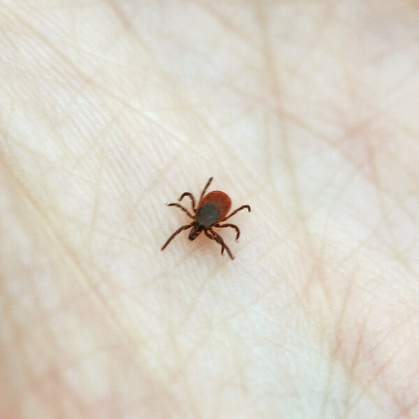 Lyme Disease Is On The Rise Again Here S How To Prevent
