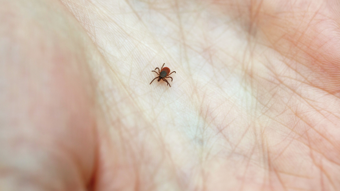Dont Panic If You Get Bit By A Tick Here Are 5 Tips To