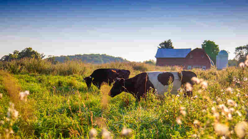 Why More Farmers Are Making The Switch To Grass-Fed Meat And Dairy