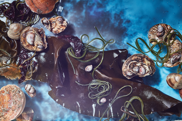 Kombu, kelp, oysters, clams and other mollusks. If we farm seaweeds like kelp and kombu and protect bivalves, they could become a reliable source of food in the future, especially for coastal communities, says Wist.
