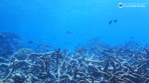 Study: 'Urgent' Action Against Global Warming Needed To Save Coral Reefs