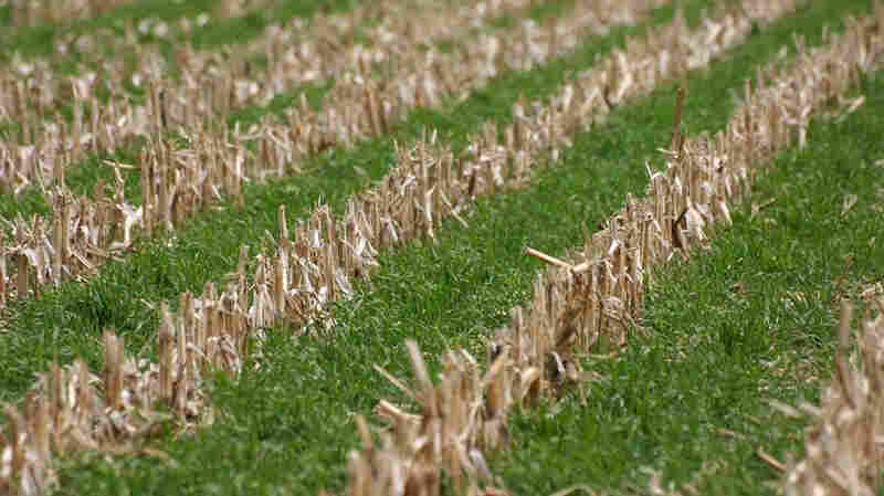 How To Make Farmers Love Cover Crops? Pay Them