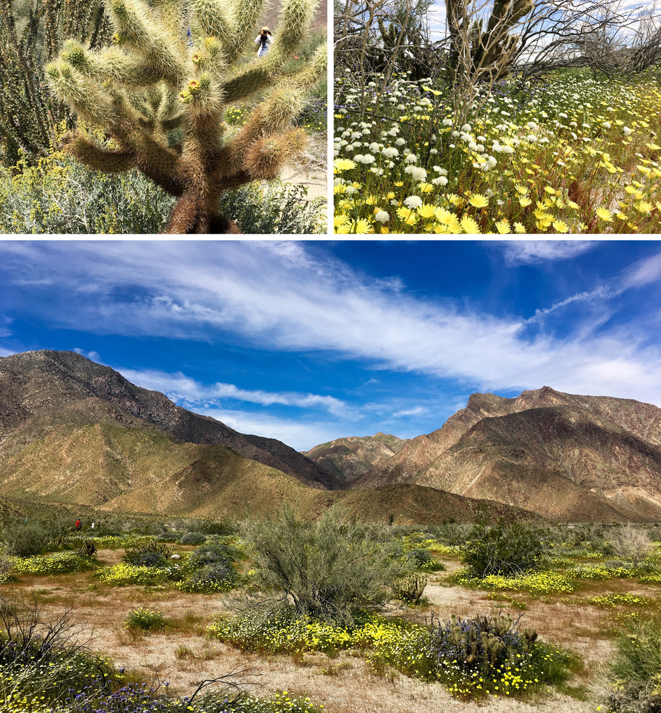 California Deserts In 'Super Bloom' Thanks To A Wet Winter ...