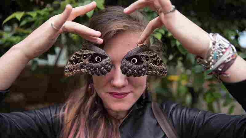 To Put You At Ease With Creepy-Crawlies, Entomologists Face Your Fears
