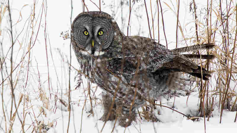 Some Wildlife Photographers Use Bait, But Is It Worth The Shot?