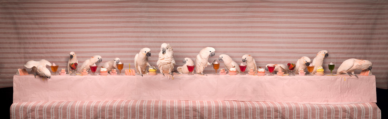 How Do You Dream Up A Cockatoo Feast? An Artist Explains In 'Imaginarium'