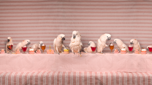 The Moluccan Cockatoo Feast, from the series The Fantastical Feasts, 2014