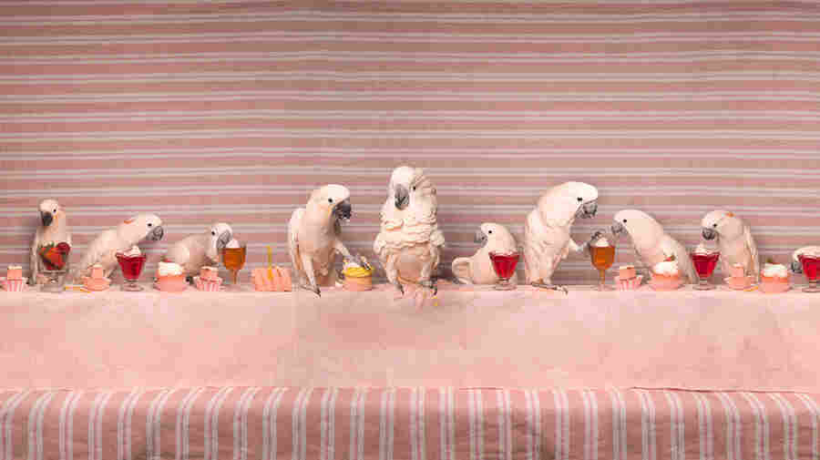 How Do You Dream Up A Cockatoo Feast? An Artist Explains In 'Imaginarium'