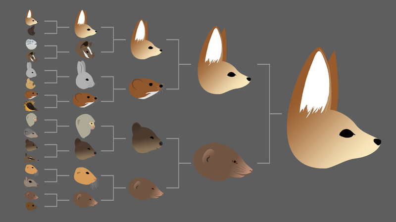 One possible result in the Mighty Mini Mammals division of 2015's Mammal March Madness tournament. If the species that's seeded highest always wins its bracket, the fennec fox will beat out the rest of the division and advance to the final four.