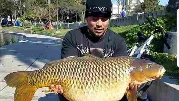 Fishermen Catch 50-Pound Carp In The Middle Of Los Angeles