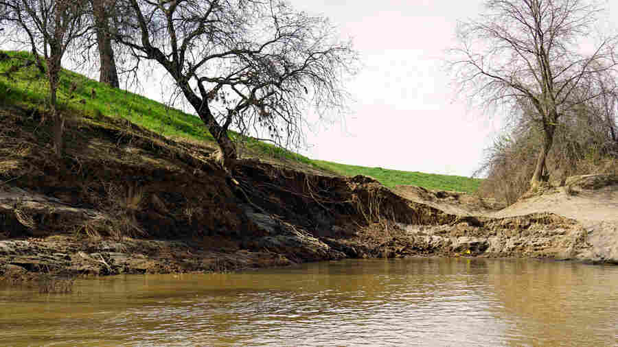 Where Levees Fail In California, Nature Can Step In To Nurture Rivers