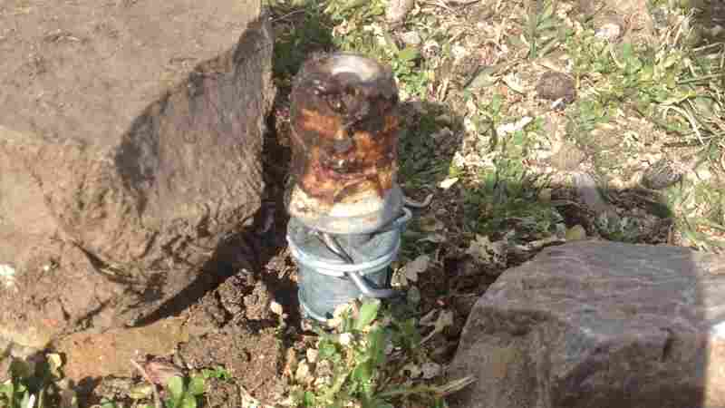 Calls Mount For Ban On 'Cyanide Bombs' After Death Of Family Pet