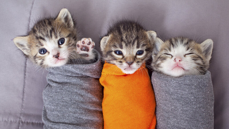 Could 'No Kill' For Shelter Cats And Dogs Be Policy By 2025? : 13 7