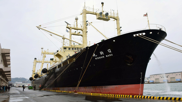 The Nisshin Maru, mother ship in the Japanese whaling fleet, returns to port in southwestern Japan on Friday.