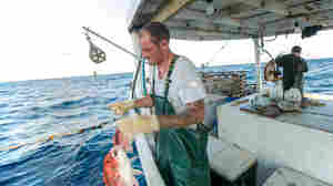 The Race To Fish Slows Down. Why That's Good For Fish, Fishermen And Diners