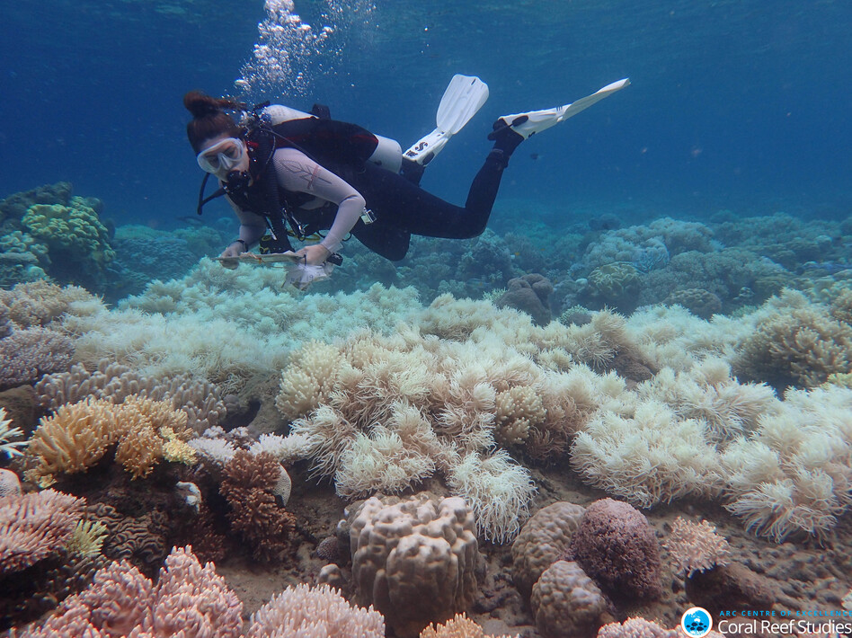 A diver near Australia's Orpheus Island surveys bleached Great Barrier Reef coral in March 2017. (Greg Torda/ACR Centre of Excellence for Coral Reef Studies)