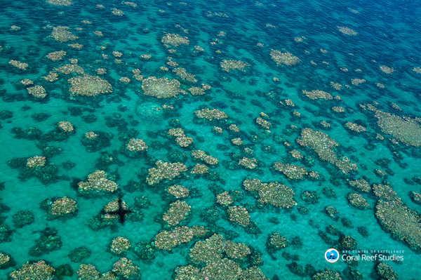 Bleached coral photographed during an aerial survey near Cairns, Australia, in March 2017.