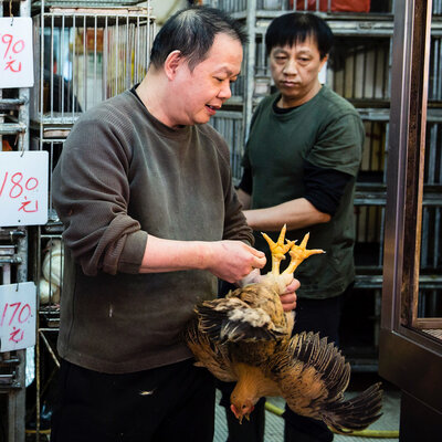 Why Chinese Scientists Are More Worried Than Ever About Bird Flu