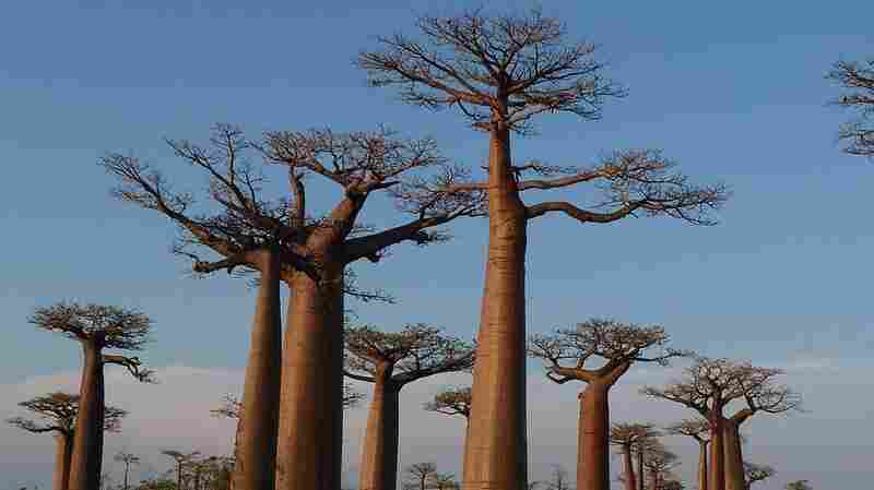There Are More Than 60,000 Tree Species Worldwide, Scientists Say