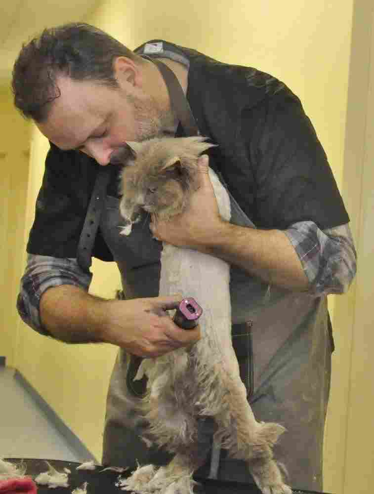 Cat groomer Alex Perry shaves a cat.