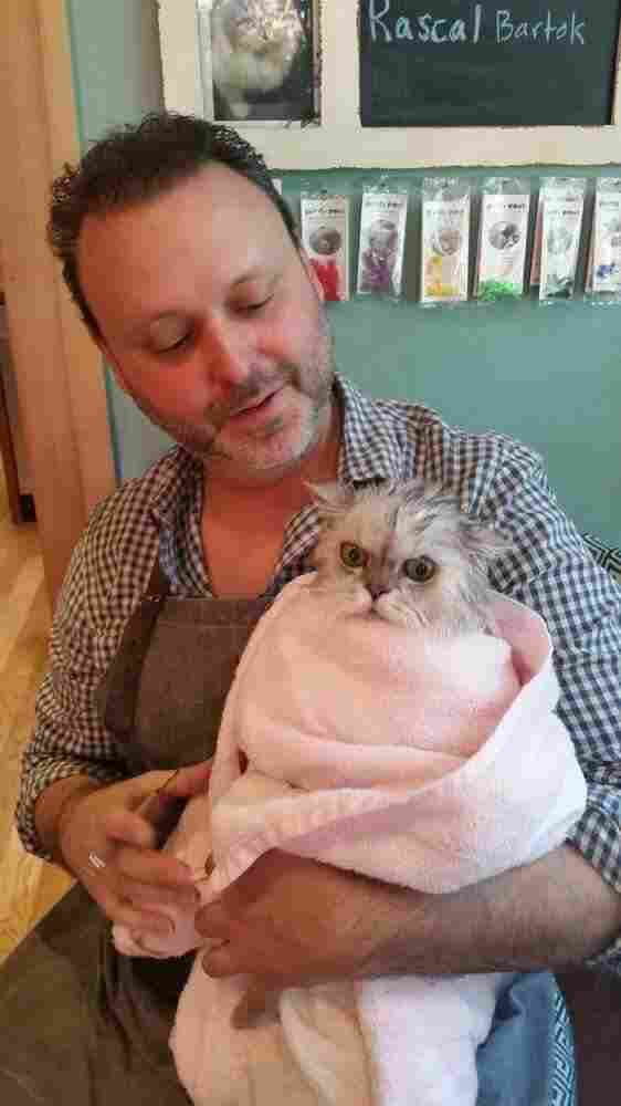 "Cat groomer Alex Perry with a cat after he bathed it. ""I like to wrap them in a little microfiber cloth and then we roll them in the beach towel and we make a little purr-ritto,"" Perry says."