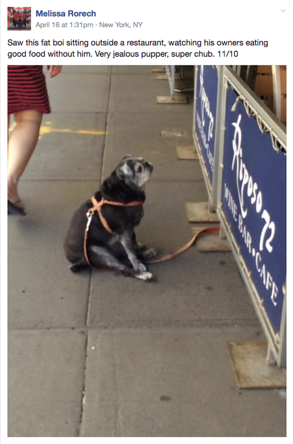 """This post uses the term """"fat boi"""" to describe the small doggo in the picture."""