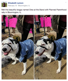 Dogspotting keeps its users from getting political. In this post, the black and white dog shown is said to be at a Planned Parenthood rally, but not stating any political allegiance.