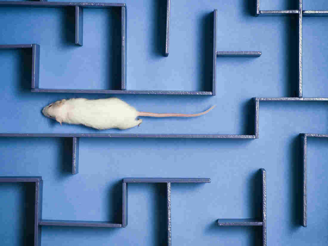Young blood makes old mice smarter, says study