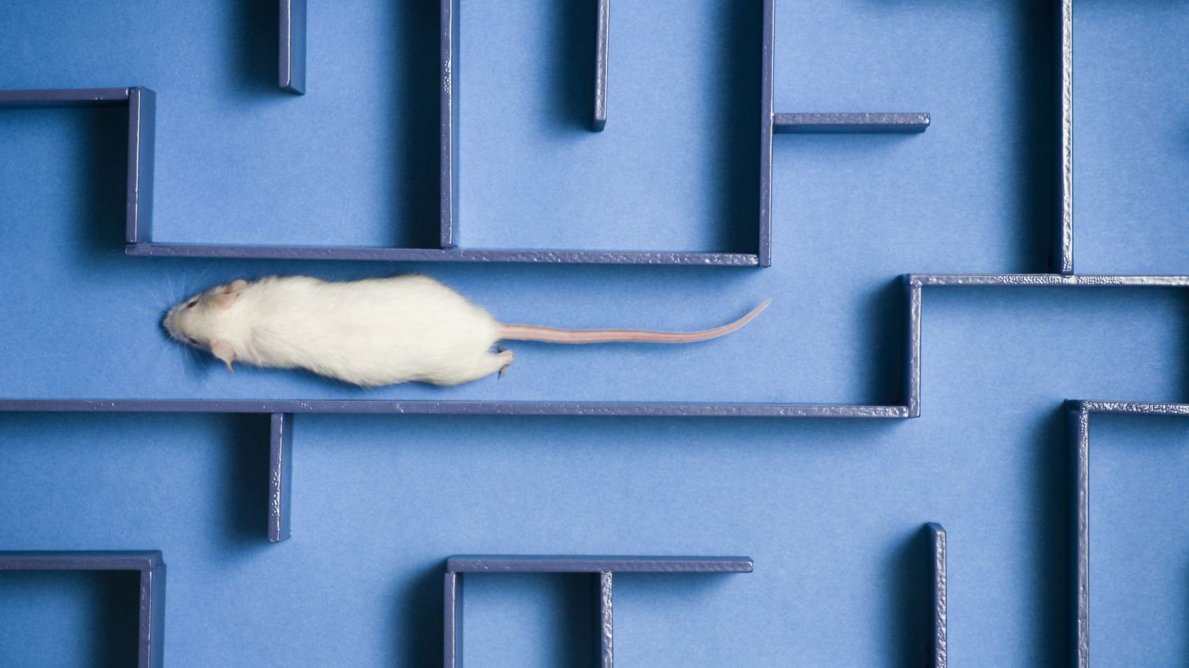npr.org - Rae Ellen Bichell - Human Umbilical Cord Blood Helps Aging Mice Remember, Study Finds
